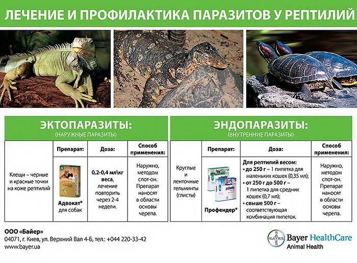 лечение от паразитов самара