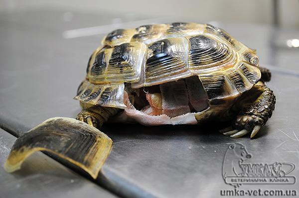 Черепаха - снилась черепаха - то по китайскому соннику говорится: чтобы понять сон, важно сосредоточиться на следующих моментах:.
