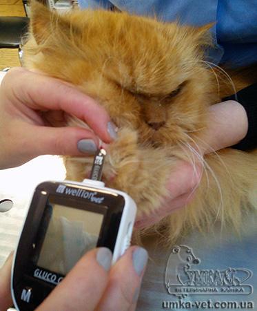 Сахарный диабет и операции у кошек
